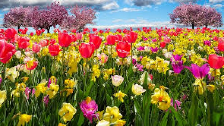 SPRING Your HVAC System Forward Today